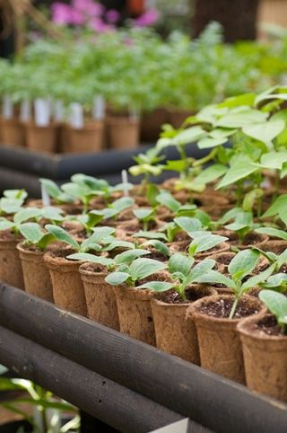 Better seedlings