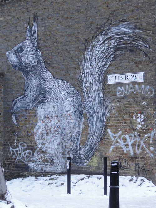 Graf squirrel 1
