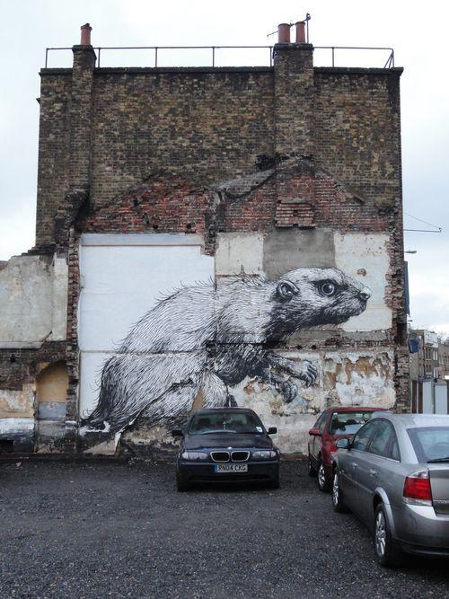 Graf rat 02